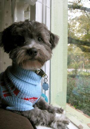 Shortysweater2
