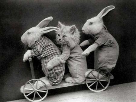 Vintage-easter-bunny-cat